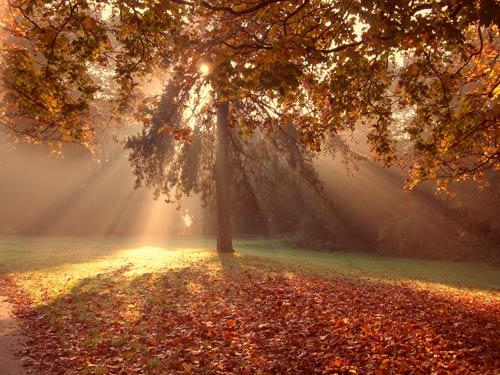 Autumn-sunburst-landscape.jpg