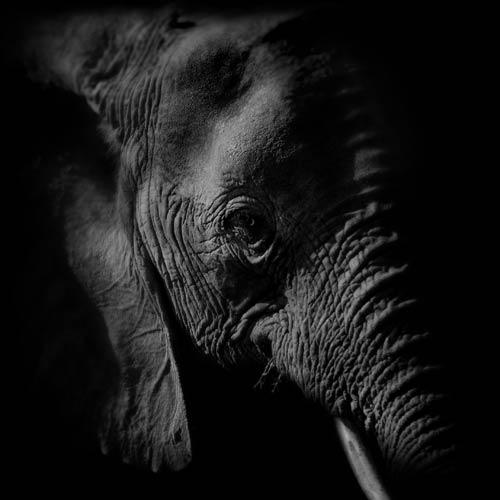 La fin des éléphants dans nos zoos ?
