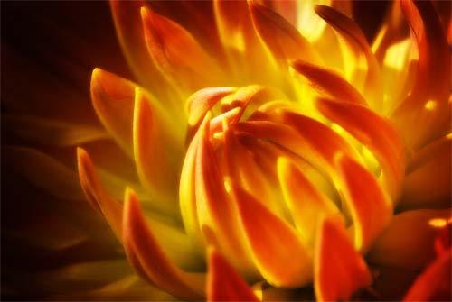 أسرار وجمال عن عالم الازهار والورود