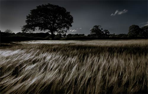 Wheat Field II