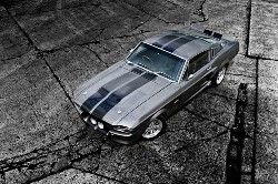 Mustang Muscle