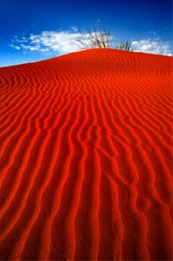 Sand Dunes Wolwedans