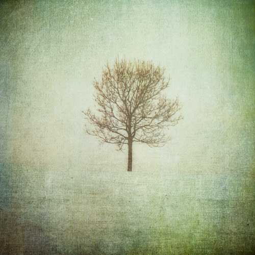 Lonely Tree abstract art print