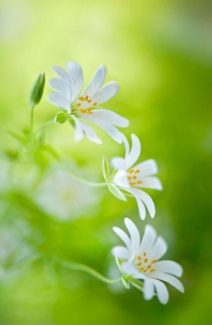 Floral Spring Delights