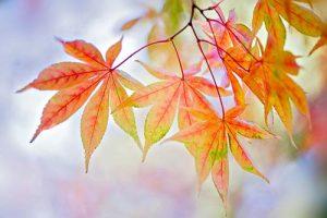 Macro Autumn Palette