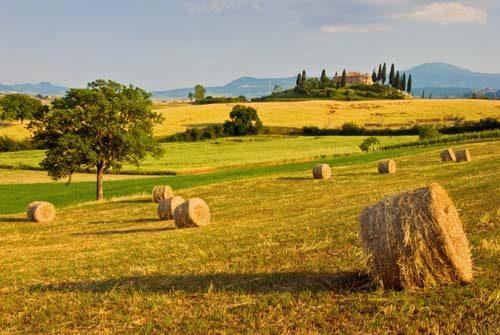 Landscapes Cedar View