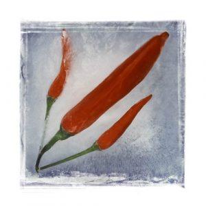 Modern Art Chili Pepper