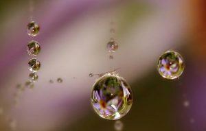 Macro Cobweb Tears