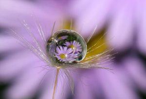 Macro Daisy Reflections