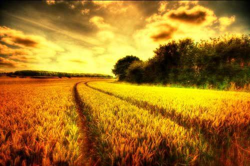 Landscapes Follow