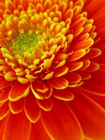 Floral Gerbera Delight