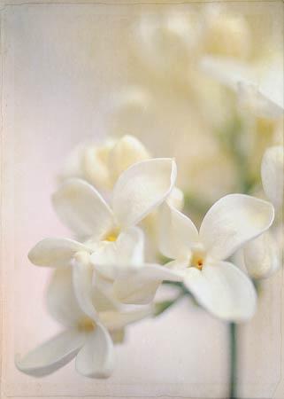 Floral Soft Lilac