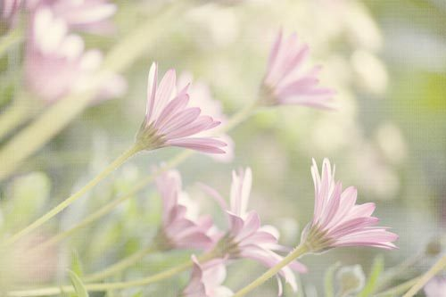 Floral Summer Dreams
