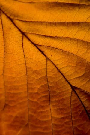 Macro Autumn Gold