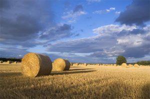 Hay Bale Landscape