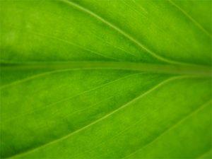 Macro Soft Focus Leaf