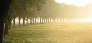 Panoramic Misty Trees