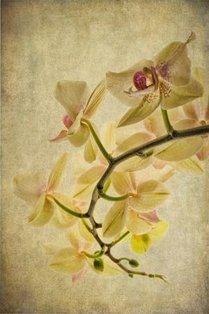 Orchid Textures