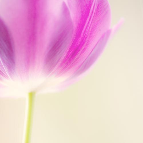 floral flower print canvas gallery