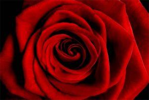 Floral Big Red