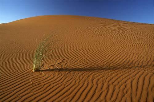 Fine Art Desert Life