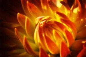 Macro Fire Flower