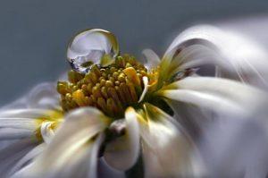 Macro Whisper White