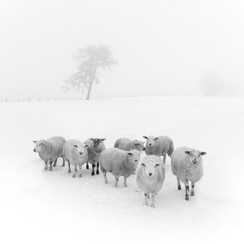 Black & White Winter Woolies