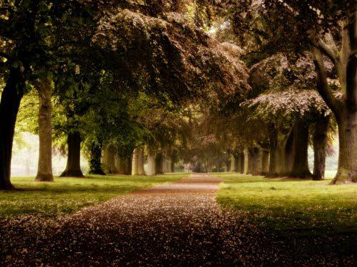 Landscapes Woodland Path